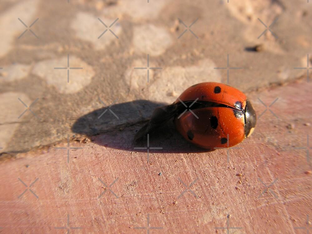 Ladybug by queensoft