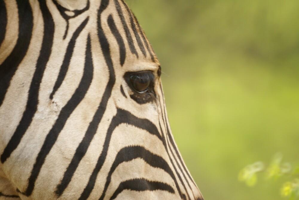 Stripy's Eye by Wazi