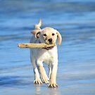Puppy On Ice by rosaliemcm