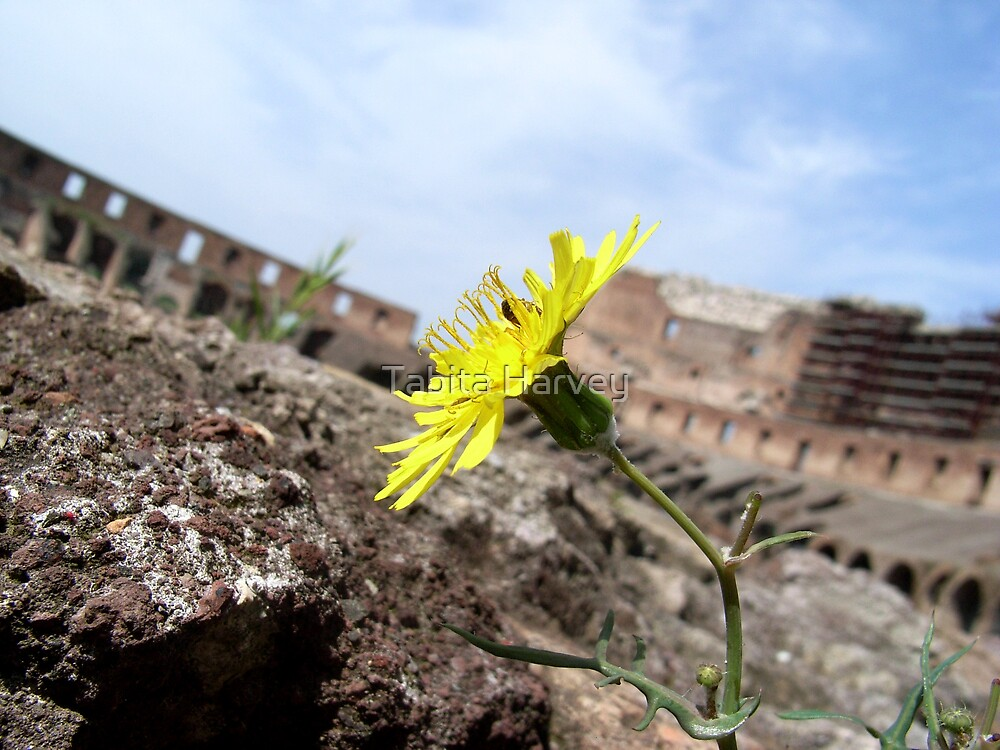 Lonely Little Flower at Colosseum by Tabita Harvey