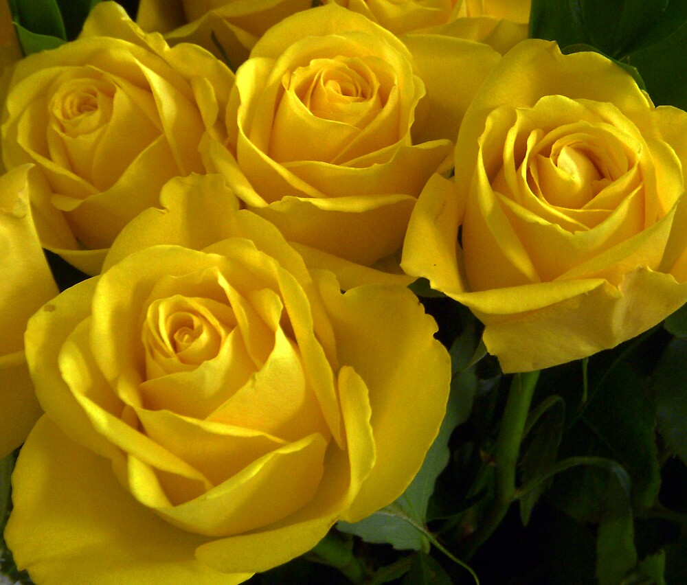 Yellow Rose Garden by Swede