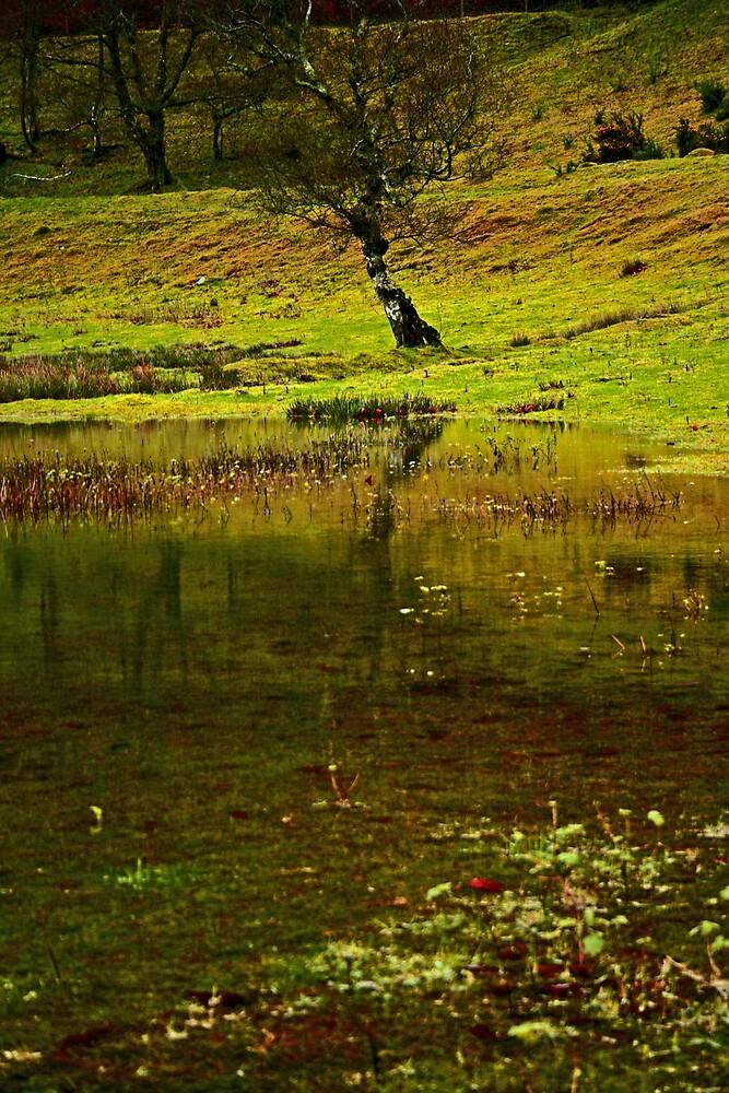 autumn bog by western