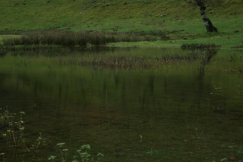spring bog by western