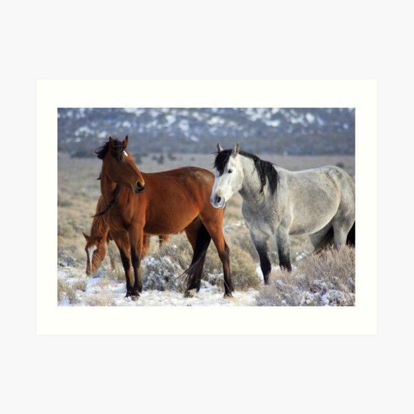 Snow Mustangs Art Print