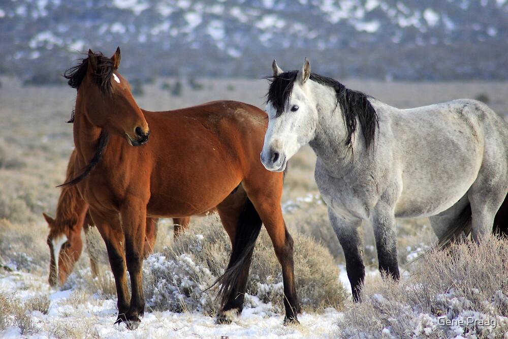 Snow Mustangs by Gene Praag