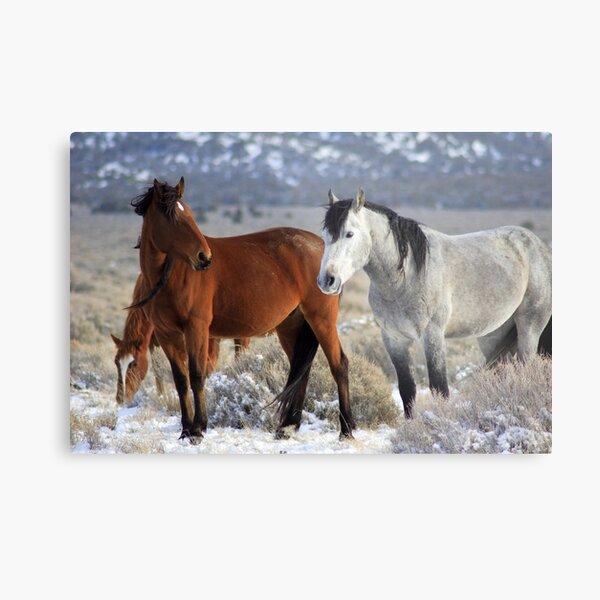 Snow Mustangs Metal Print