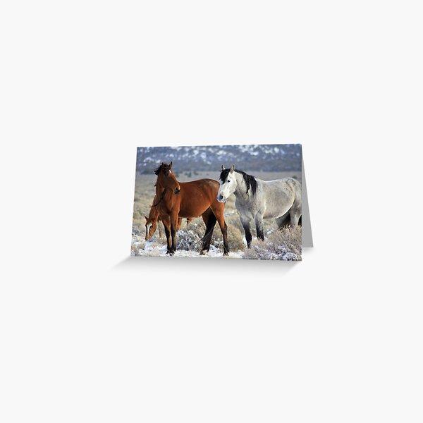 Snow Mustangs Greeting Card