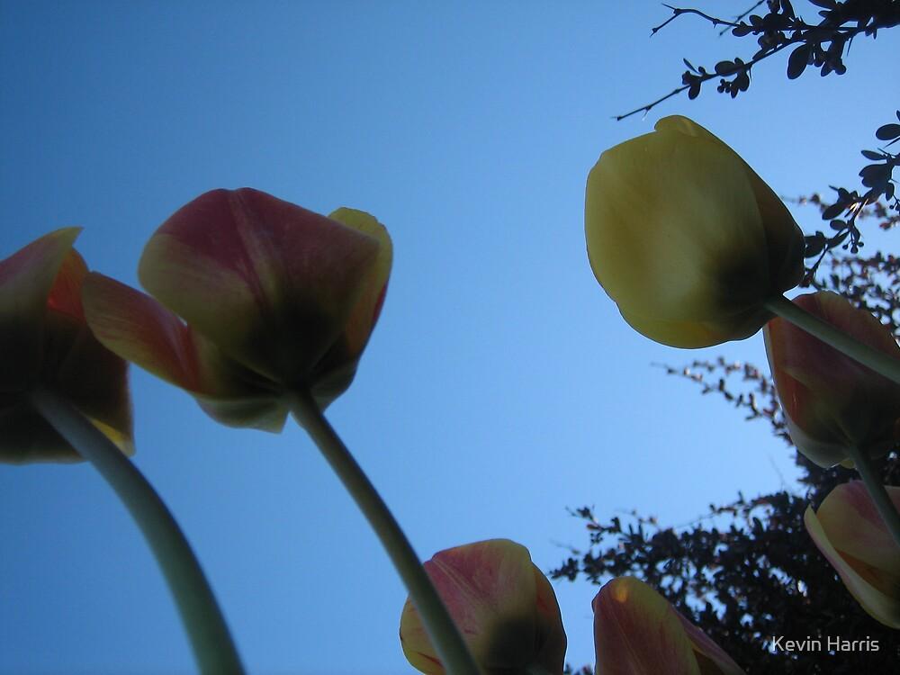 sky scraping flowers by Kevin Harris