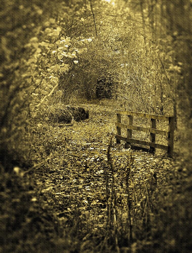 A private walk by Martyn Starkey