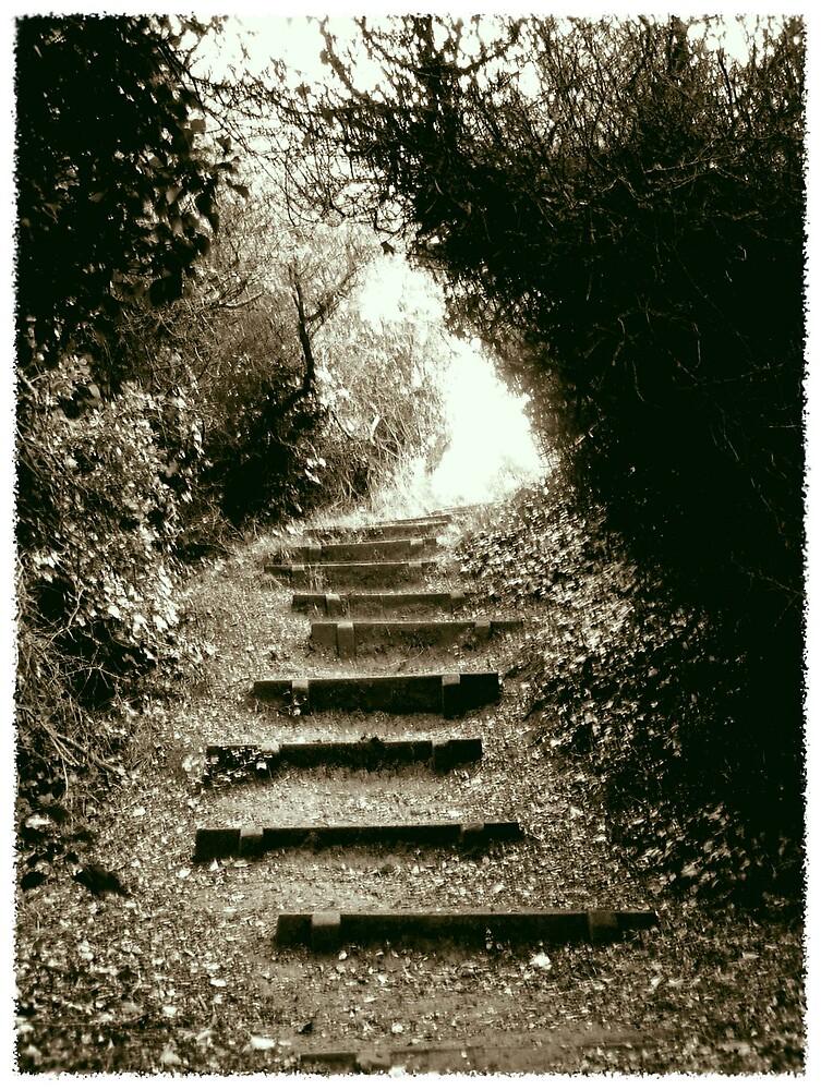 Steps by Oli Johnson