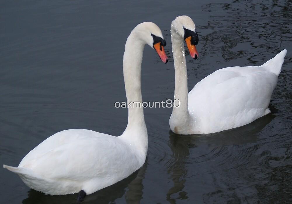 Swan Lovers by oakmount80