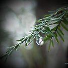 Hemlock Tears by © CK Caldwell IPA
