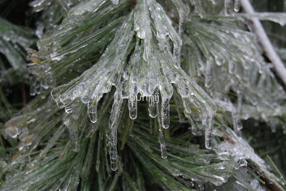 Frozen Spruce by bunnij