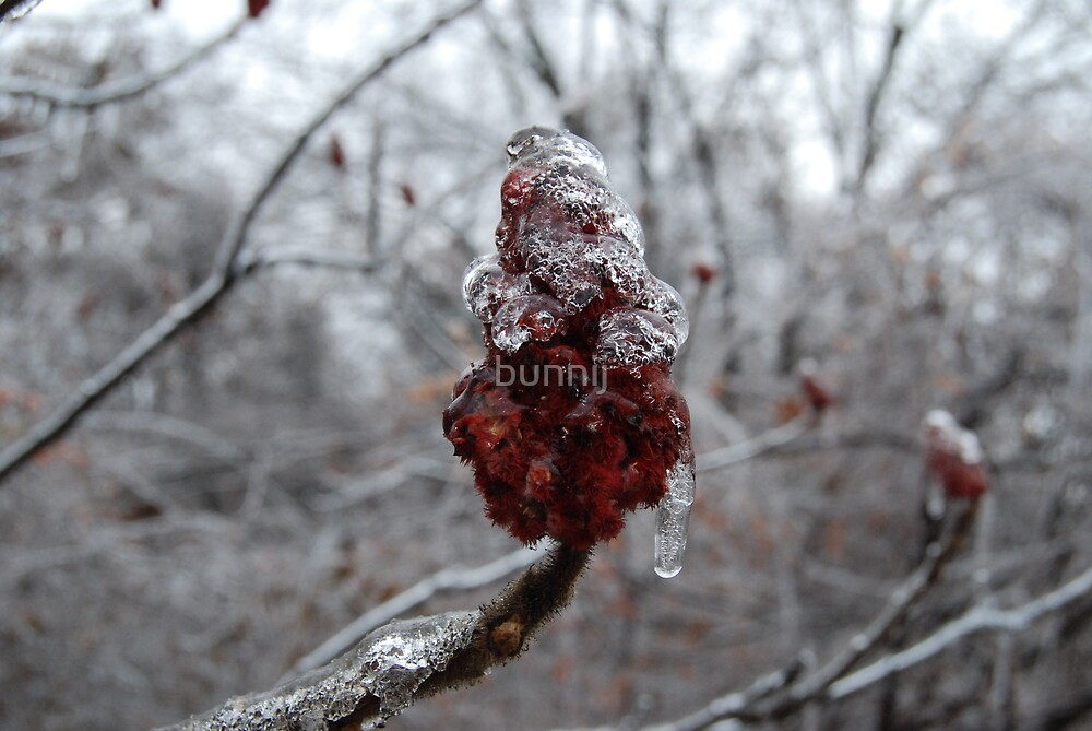 Frozen Sumac by bunnij
