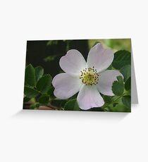 Sweet Briar Rose Greeting Card