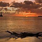 Dawn by Anna Ridley