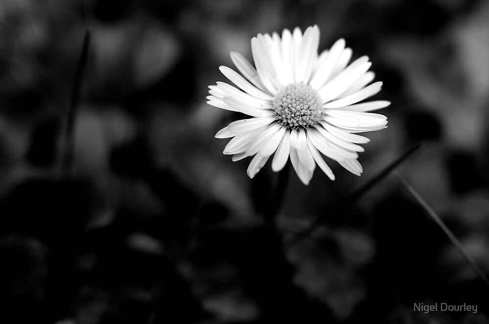 Isolated IV (b+w) by Nigel Dourley