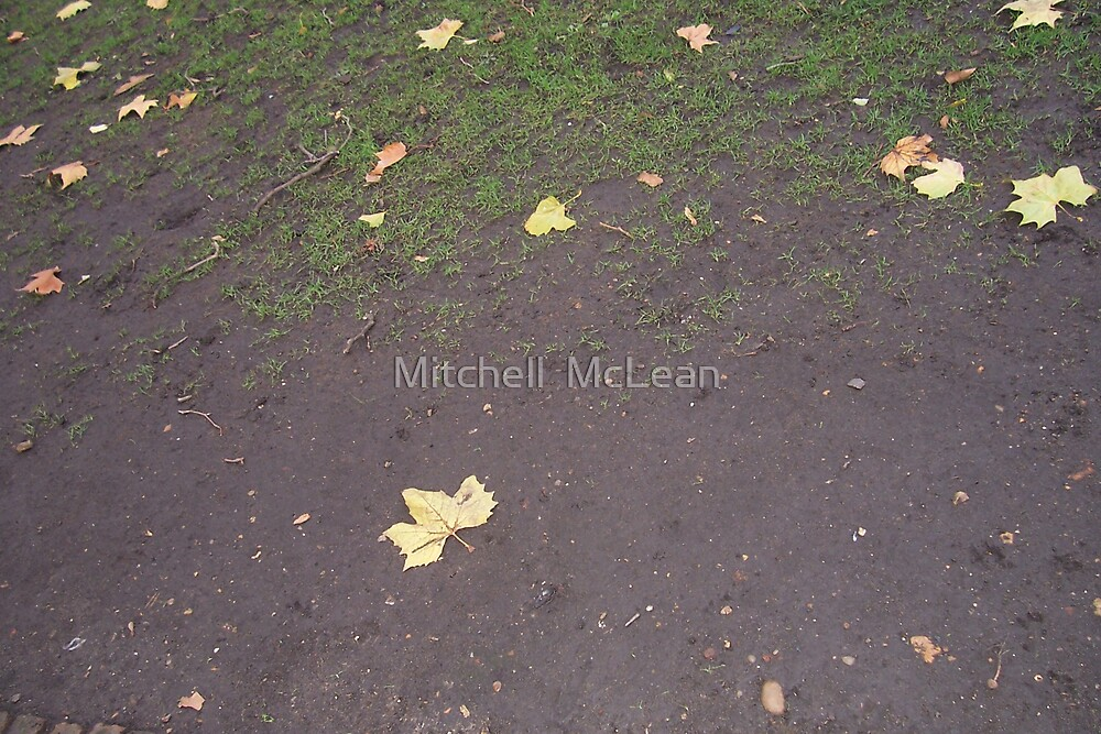 "Wiliam Blakes resting place""The leaf marks the spot""! by Mitchell  McLean"