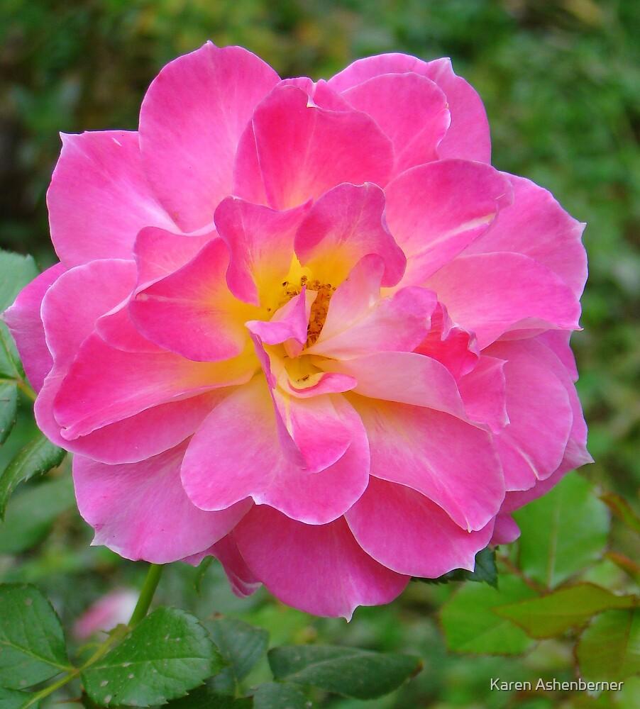 Pretty in Pink by Karen Ashenberner