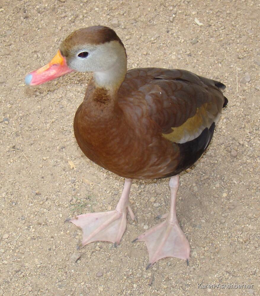 Lil Quacker by Karen Ashenberner