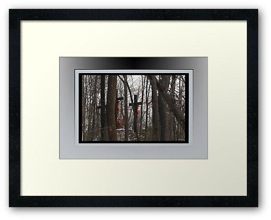 Hidden in the Woods by TerriRiver