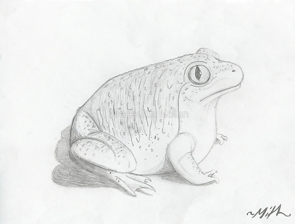 Frog by Meredith Nolan
