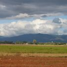 Ploughed Fields, Sugar Cane, and Crops by MardiGCalero