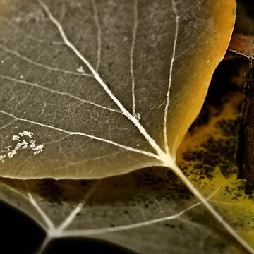 Fall Leaf by photokc