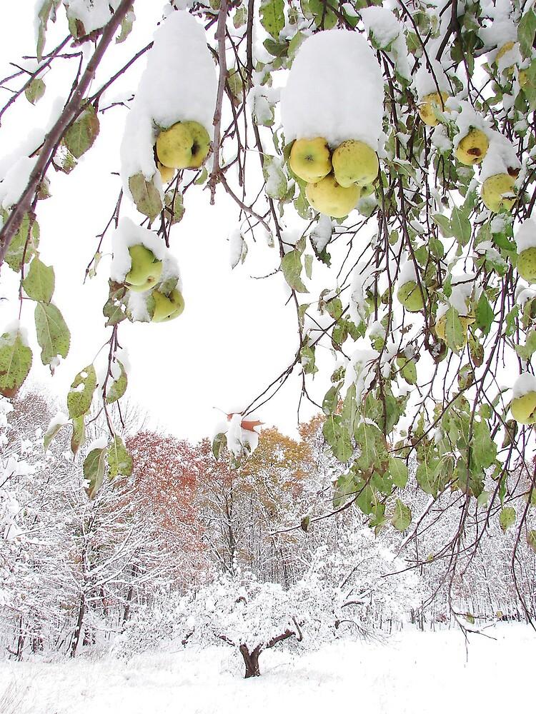 Snow apples by vikinggirl