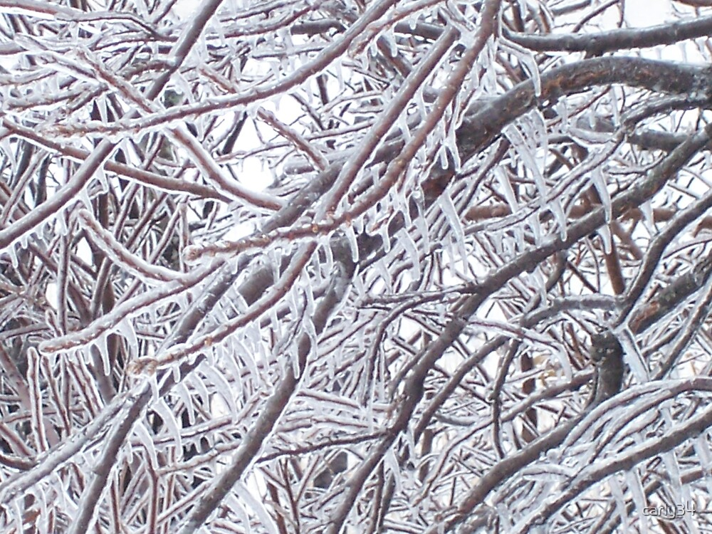 Frosted Branches by carly34