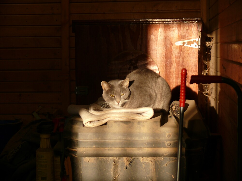 Purrfect Barn Cat by RayG