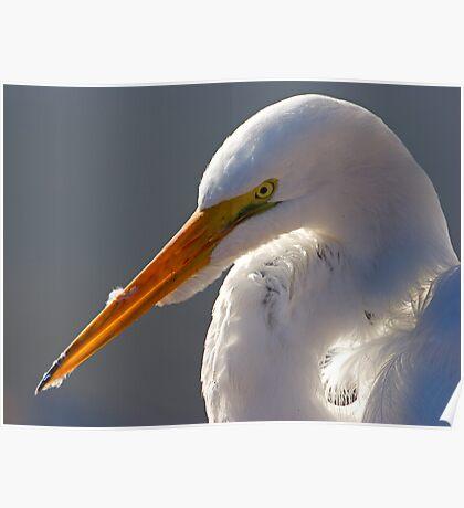 Portrait of an Egret Poster