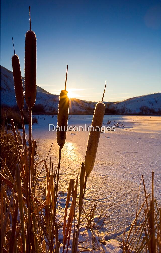 Frozen Cattail Sunrise by DawsonImages