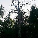Strange Tree by carly34