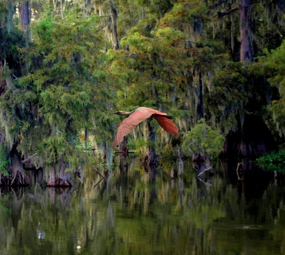 Roseate Spoonbill In Flight by AcadianaGal