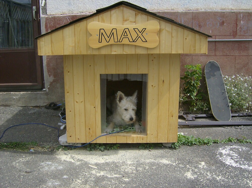 Doghouse by sydneyschell