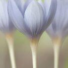 Flypaper Flowers by Jill Ferry