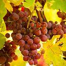 Alsace wine route by amrita125