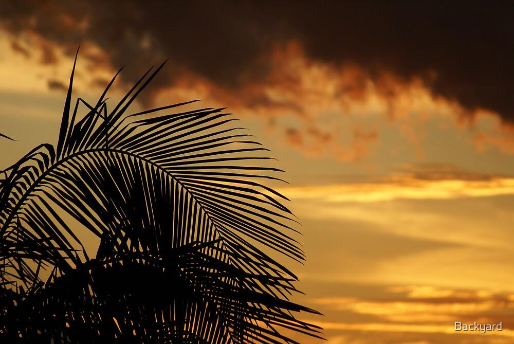Palm Sky by Backyard