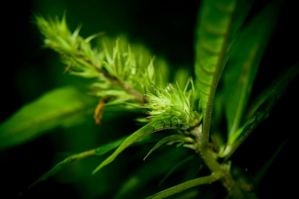 Wild plant by fero