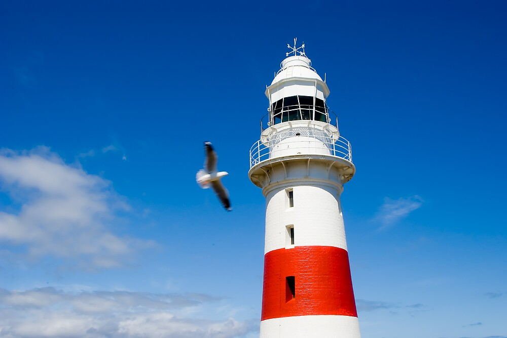 Lighthouse with Seagull by Nathan Ashton