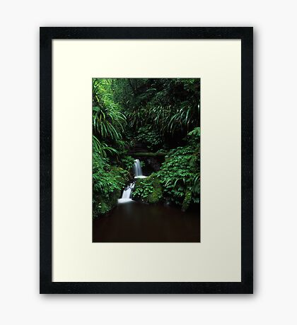 sub-tropical rainforest - Lamington NP, Qld. Framed Print