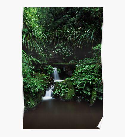 sub-tropical rainforest - Lamington NP, Qld. Poster