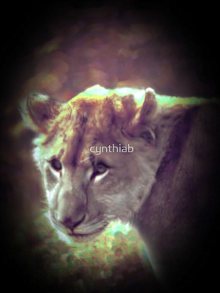 lioness by cynthiab