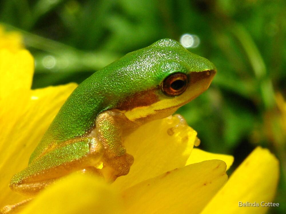 frog on flower 2 by Belinda Cottee