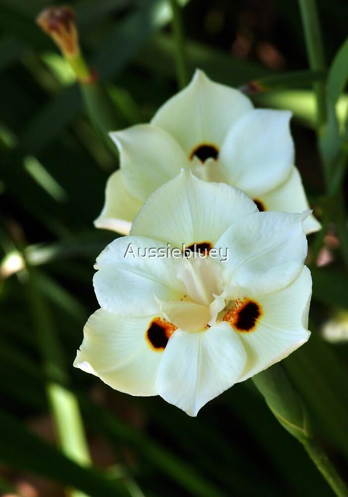 Flowers. by Aussiebluey