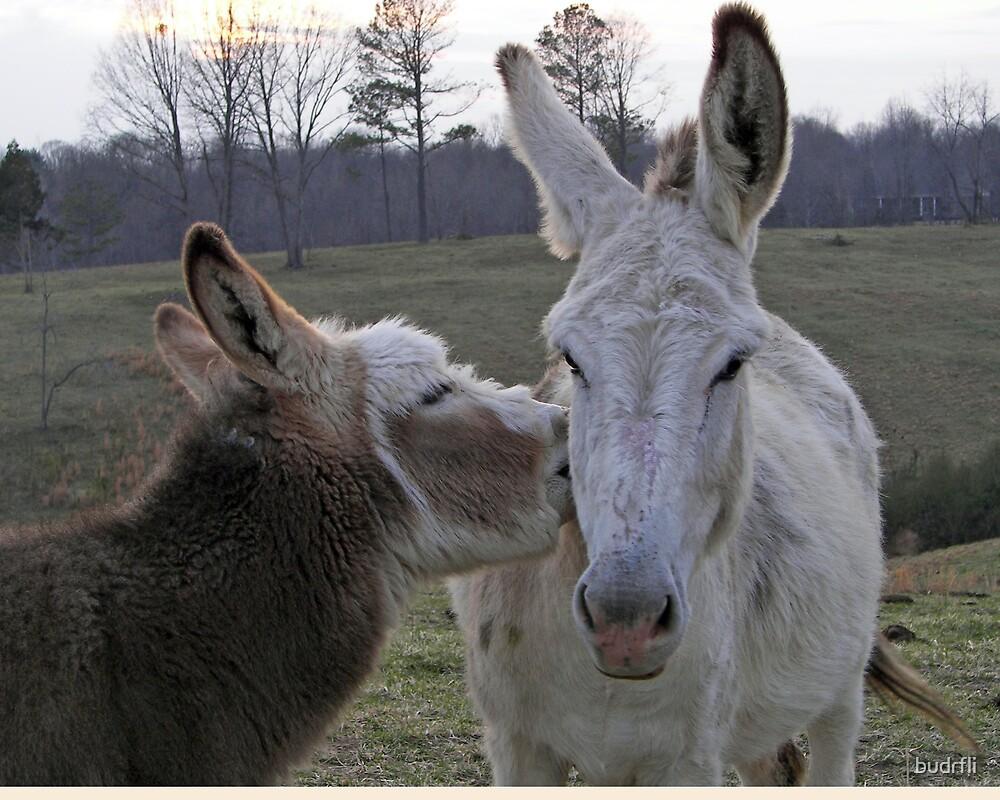 the kiss by budrfli
