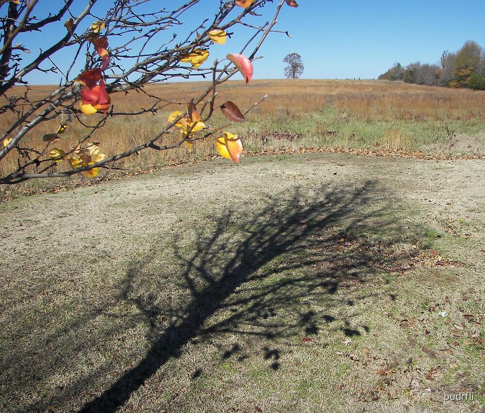 shadow of a tree by budrfli