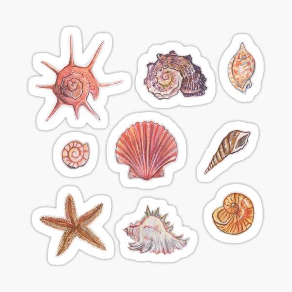 Seasons of Shells Sticker