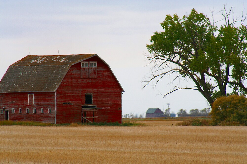 RED BARN by Madeline M  Allen
